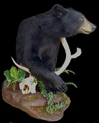 Black Bear Mount - Custom Base