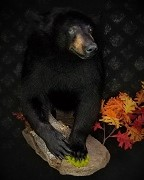 Half Mount - Black Bear