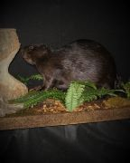 Rich S Taxidermy Fair Pricing Satisfied Customers And