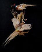 Pair of Ring Necked Pheasants
